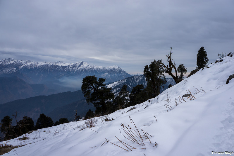 "Taken at Latitude/Longitude:30.065019/80.209260. 4.38 km South-West Munsiyari Uttar Pradesh India <a href=""http://www.geonames.org/maps/google_30.065019_80.209260.html""> (Map link)</a>"