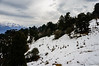 "Taken at Latitude/Longitude:30.051667/80.224183. 4.95 km South Munsiyari Uttar Pradesh India <a href=""http://www.geonames.org/maps/google_30.051667_80.224183.html""> (Map link)</a>"