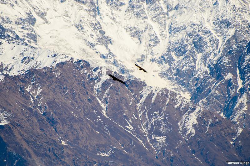 "Taken at Latitude/Longitude:30.048422/80.227277. 5.22 km South Munsiyari Uttar Pradesh India <a href=""http://www.geonames.org/maps/google_30.048422_80.227277.html""> (Map link)</a>"