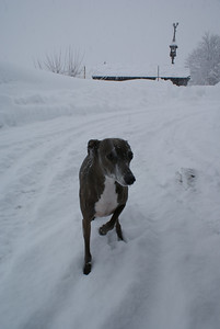 Noodle hated it. There was about 7 feet of snow on the ground and we got two more feet of snow during our stay.
