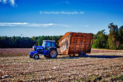 Tractor pulls cotton trailer and awaits the next load of cotton as the crew works the field.