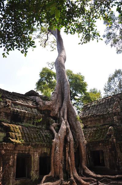Ta Phrom - Siem Reap, Cambodia