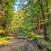 Walking Trail at Cedar Falls