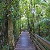 Walkway Waipoua Forest