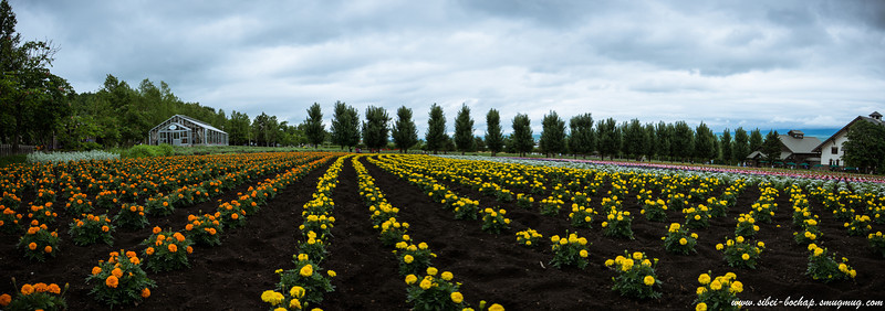 Farm Fomita fields