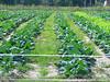nc holden farms 009