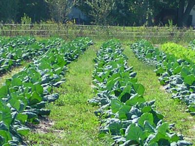 nc holden farms 006