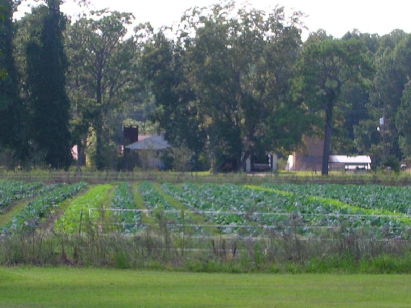 nc holden farms 002