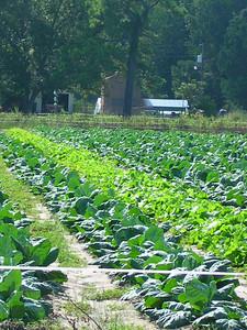 nc holden farms 010