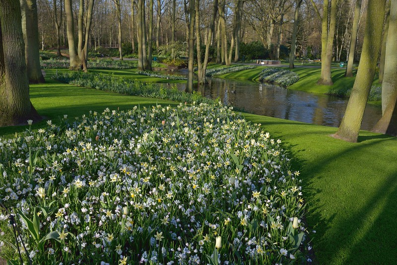 Early morning at Keukenhof Gardens on April 15, 2015.<br /> Layers of blooms of early bulbs.
