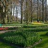 Bulbs supplied by various growers are planted to bloom in succession throughout the 2 months that the Keukenhof Garden is open.