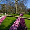 Plantings follow patterns planned and planted by the professional gardeners at Keukenhof.
