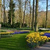 Dazzling display of early bulbs at Keukenhof Gardens on April 15, 2015.