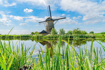 Scenic Kinderdijk area of ponds, fields and windmills.