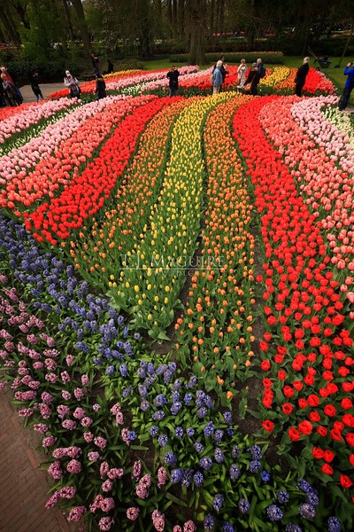 Field of Dreams, Keukenhof Gardens, Holland