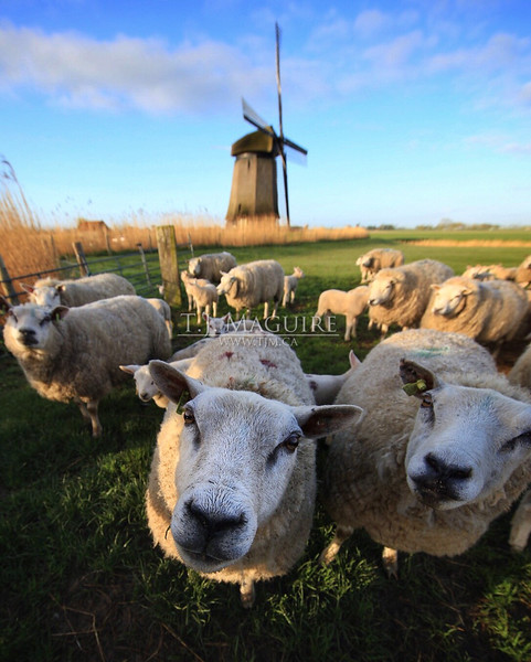 Hello, West Friesland, Holland