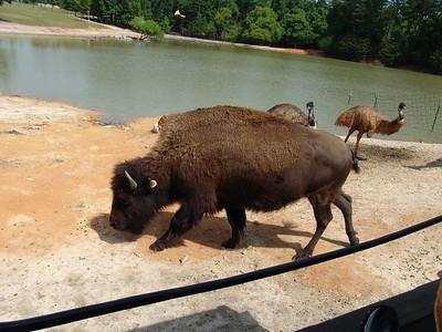 HollyWild Zoo