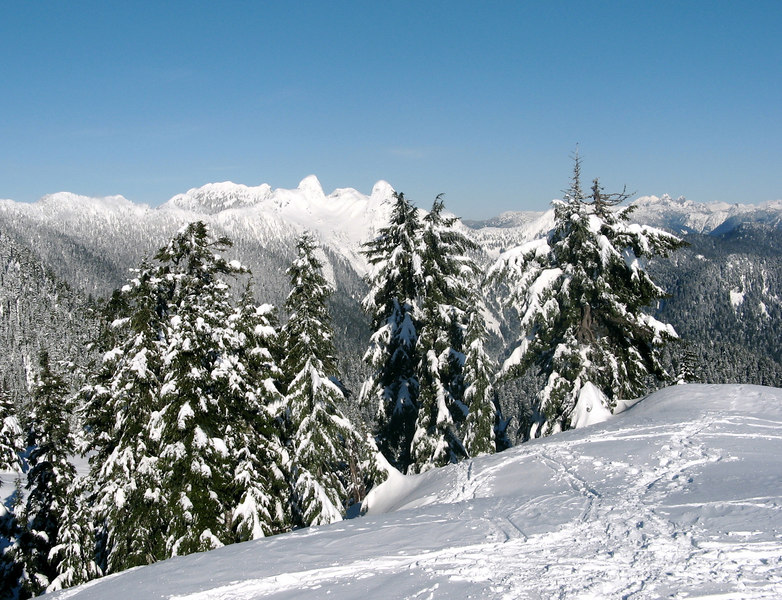 Top of Hollyburn Mountain - view looking north