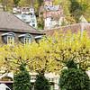 Heidelberg Trees
