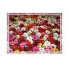 photobook 1260c3