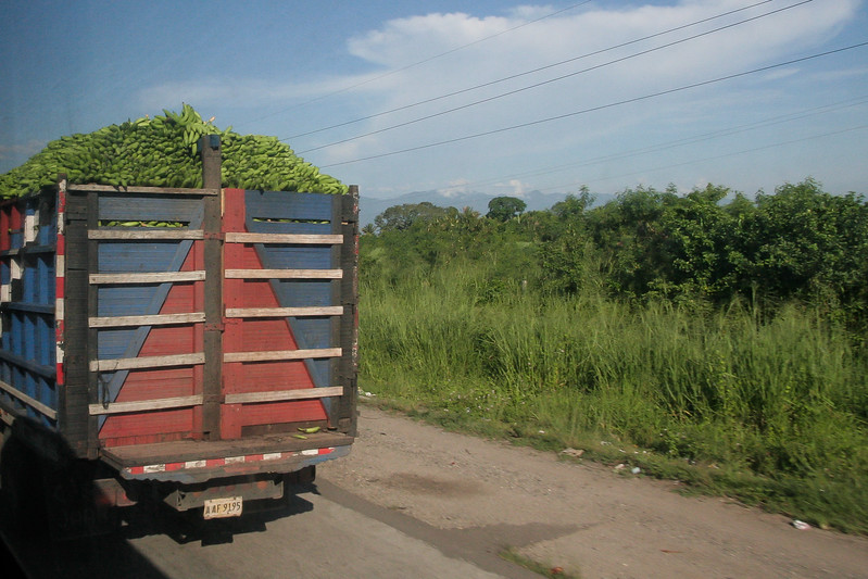 A truck carrying freshly harvested bananas to be processed.