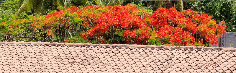 Honduras 2012 Flowers, Birds & Sunsets