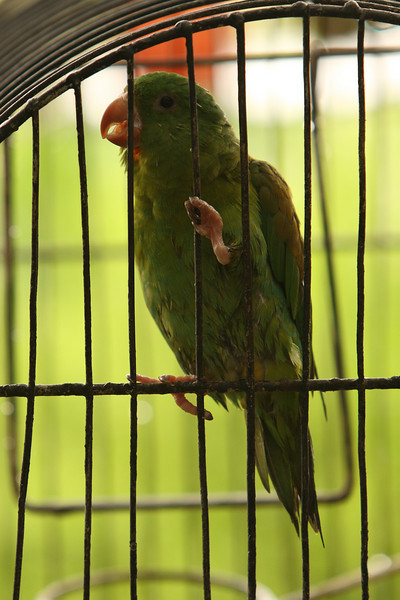 Hey, another parrot! What's the probability of finding one on my next trip?