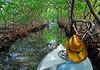 MangroveTunnelRoatanHonduras-04