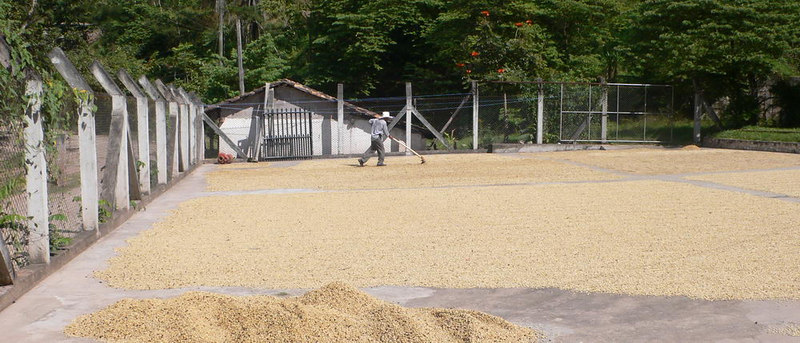 drying coffee beans, Copan Ruinas, Honduras