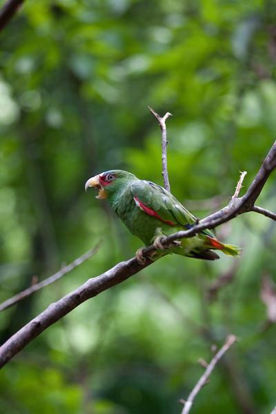 a local resident at Macaw Mountain Bird Park, Copan, Honduras