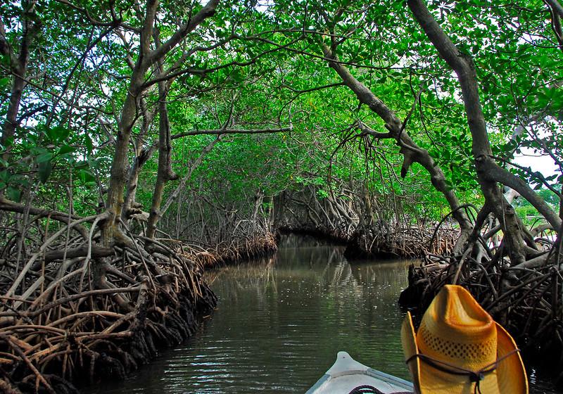 MangroveTunnelRoatanHonduras-02