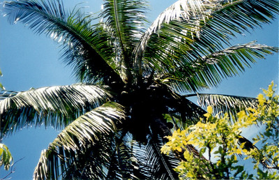 Bahama8