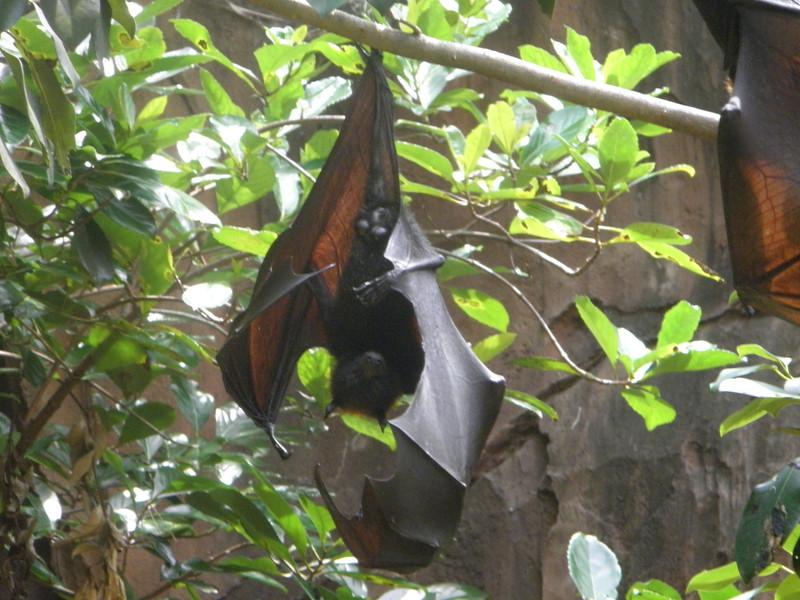 It's a boy bat... ;-)
