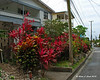 Plenty of colorful plants can be found in front of houses