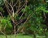Smooth-Billed Ani (similar to our crows)