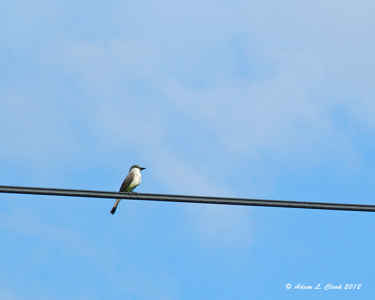 A bird perched on the electrical wires