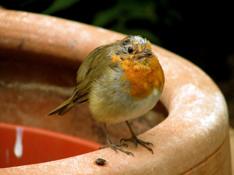 The bird hacked something up special for us. Edinburgh Botanical Gardens