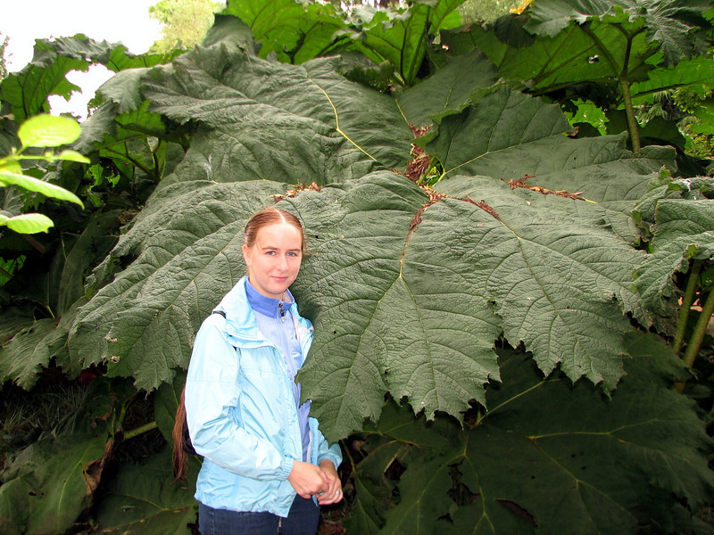 Really big leaf Edinburgh Botanical Gardens