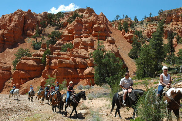 Sharing the trails with a horse tour.