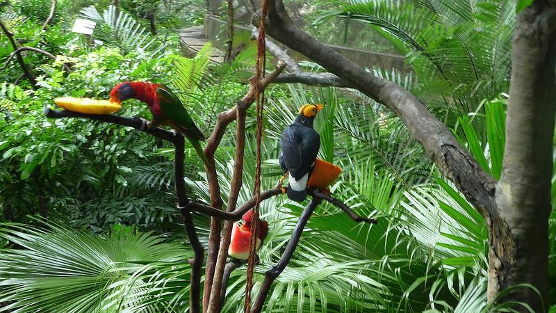 Views from Hong Kong walk through aviary