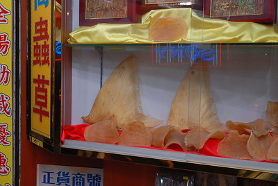 © Joseph Dougherty.  All rights reserved.   Dried shark fins for sale at the Chinese apothecary shop. They will be turned into shark-fin soup. The best specimens are kept in a locked case.