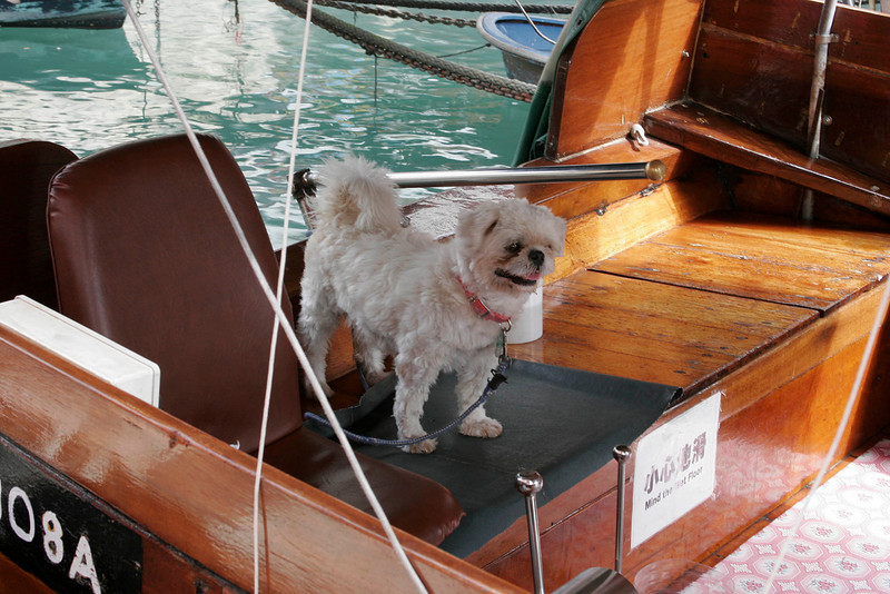 Water Taxi driver's dog
