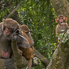 A family of monkeys in Kam Shan Country Park