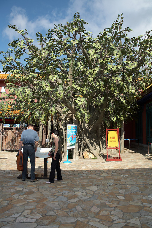 Buddha was supposed to have slept under this tree in the Ngong Ping Village.