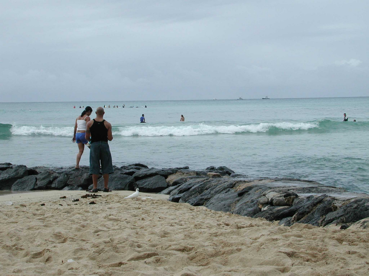 Not exactly killer waves, but lots of surfer-noobs.
