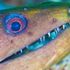 Moray Eel - Dive 2 - Sea Tiger