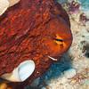 Day Octopus - Dive 6 - Kewalo Pipe