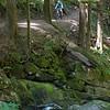 Siouxan Creek Trail, WA