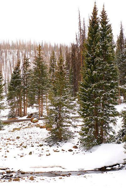 A stream cuts across the white landscape.<br /> On the way to Cedar Breaks national monument.