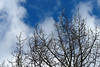 Bare trees contrasted nicely against the skies.